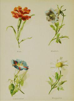 Gallery.ru / Фото #22 - The Artistic language of flowers (1888) - Kalla