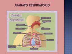 imagenes de sistemas digestivos - Buscar con Google
