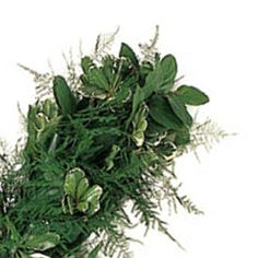 The Plumosa Medley Greens Garland contains Plumosa, Variegated Pittosporum, and Salal greens. This beautiful and lush blend gives you the perfect combination of light and dark greens with the soft, plush feel of the fern. Wrap around banisters, place down the center of a table for a fresh runner,...