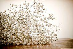 Sur mon blog, Needs and Moods, je vous donne mon avis sur le concept des fleuriste en ligne.  www.needsandmoods.com  #fleurs #fleurs #bouquet #bouquets #fleuriste #décoration #vegetal #green #blossom @francefleurs #francefleurs #gypsophile #perfecta #gypsophila