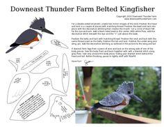 Опоясанный пегий зимородок или североамериканский ошейниковый зимородок