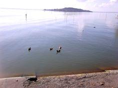 Anatre nel porto
