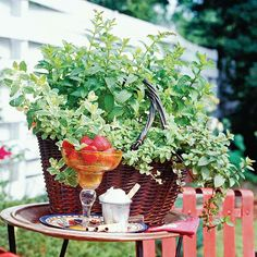 You don't need a big herb garden to grow and harvest home grown herbs! See how to easily grow herbs in a container garden! We show you the best herbs to choose for your container garden and how to care for them throughout the summer so you have fresh lavender, cilantro, basil and mint! An herb container garden is the perfect solution for anyone who lives in an apartment.