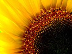 POSTER: (not exact) Closeup of center of sunflower. Charts And Graphs, Close Up, Patterns, Math, Poster, Block Prints, Math Resources, Billboard, Pattern