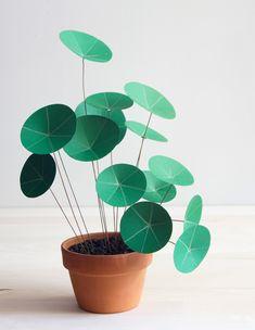 Planta de dinero en pinterest plantas cactus y suculentas - Planta china del dinero ...