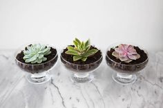 15 Flower Hacks To Make Your Home More Beautiful - Dessert bowls make chic pots for a succulent! Simply fill to the brim with potting soil, spritz the soil with tap water to moisten it, and then nestle the succulent into the top layer of the soil. Over time, it will begin to grow roots. Via @HarpersBazaar