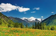 Beautiful Spring Landscape Wallpaper Wide with High Definition Mountain Art, Mountain Landscape, Spring Landscape, Landscape Art, Landscape Wallpaper, Ad Art, Poster Wall, Canvas Wall Art, Stock Photos