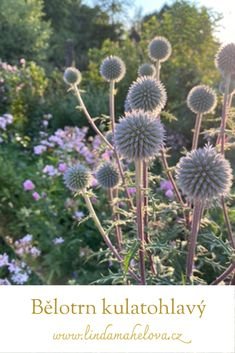 Dandelion, Gardening, Flowers, Plants, Dandelions, Lawn And Garden, Plant, Taraxacum Officinale, Royal Icing Flowers
