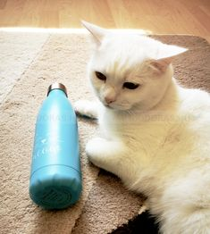 DORAS - Rozsdamentes acél termosz, világoskék alapon fehér cica mintás. Űrtartalom: 500 ml Környezetkímélő anyagból készült. KATTINTS RÁ! | #bio #drinking #környezetbarát #environmentally_friendly #doras #biodoras #környezettudatos #öko #termosz #trendi #design #dizájn #rozsdamentes_acél #stainless_steel #inox #thermos #műanyagmentes#kék #blue #waterbottle #water_bottle#fenntartható #cica #cat #cute #macska #kitten #zerowaste Minion, Water Bottle, Mint, Minions, Water Bottles