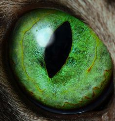 Green Cat Eye Macro Photo by Picture Zealot, via Flickr