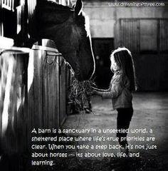 Horses horses horses :)