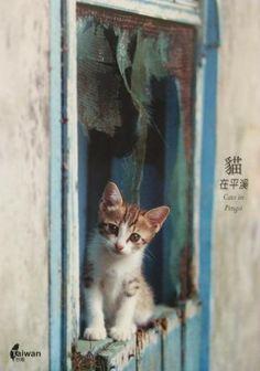 Window Cat In Taiwan