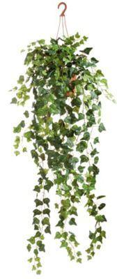 Kunstpflanze Efeu Hänger in Hängeampel Jetzt bestellen unter: https://moebel.ladendirekt.de/dekoration/dekopflanzen/kunstpflanzen/?uid=63aa8ad3-bcf4-5616-8aa7-c99979e98545&utm_source=pinterest&utm_medium=pin&utm_campaign=boards #heim #dekopflanzen #kunstpflanzen #dekoration