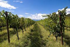 one of vineyard in Kakheti region,Georgia | by Agnieszka Kedzierska