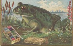 Big Green Frog & Box Of Colorful Threads-Victorian Trade Card-Coats Thread Sewing Equipment, Funny Frogs, Frog Art, Sewing Cards, Vintage Art Prints, Vintage Textiles, Green Frog, Frog And Toad, Vintage Cards