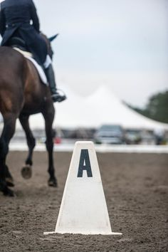 Understanding the Significance of the Basics in Dressage. Learning dressage through correct basic training can create a well-trained horse that is also a pleasure to ride.