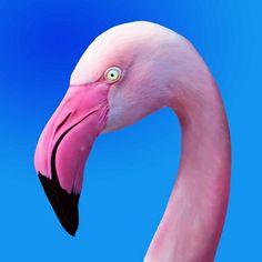 #Pink #Flamingo #Portrait #Close_Up #Art #Print by #BluedarkArt on #Society6 - $15.60