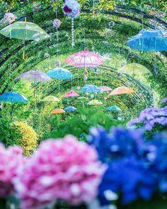 . 🏆 @hitomi_pleinelune 🏆 ..........⬆️........... チェックしてみて👍 . Location イングリッシュガーデン 横浜市 . 神奈川県の写真スポットを紹介するアカウントです。 . 素晴らしい景色の写真に タグ ▶️… Yokohama, Nymph, Hydrangea, City Photo, Environment, Fair Grounds, Beautiful, Instagram, Makeup Art