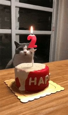The way this cat puts out the candle – Gif Funny Oh shoot that's cool Cute Funny Animals, Funny Animal Pictures, Funny Cute, Best Funny Pictures, Cute Cats, Hilarious, Animal Pics, Funny Dogs, Crazy Cat Lady