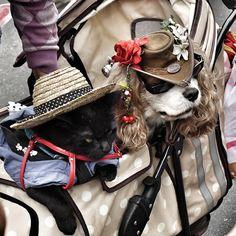 #pet fashion