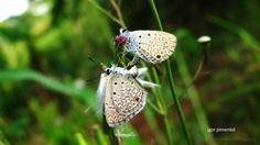 os insetos também amam... | Fotografia de bawrery | Olhares.com
