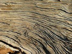 fotos de texturas naturais - Pesquisa Google