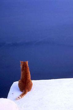 Cat in Santorini, Greece Crazy Cat Lady, Crazy Cats, I Love Cats, Cute Cats, Gatos Cat, Red Cat, Orange Cats, Ginger Cats, Mundo Animal