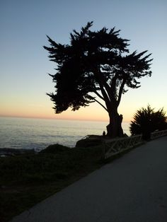 Sunset on West Cliff. my favorite spot for a walk, bike ride or even a jog while daughter roller skates. California Beach, Skates, Cliff, Daughter, Ocean, Bike, Sunset, Lifestyle, Outdoor