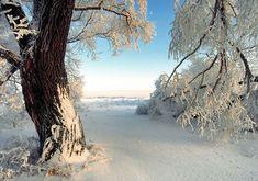 foto inverno - Risultati Yahoo Italia della ricerca di immagini