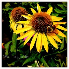 Favorite Bee Pollinator Plants for Summer #gardenchat . this is excellent advice for any gardener.
