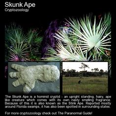 """""""This creature is said to be half man, half ape and is often called… Scary Legends, Legends And Myths, Mythological Creatures, Mythical Creatures, Short Creepy Stories, Unexplained Mysteries, Ancient Mysteries, Strange Beasts, Myths & Monsters"""