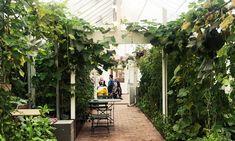 Kjøkkenhagekurset på Bygdøy Kongsgård - hageterapi Plants, Plant, Planets