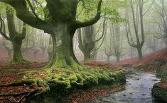 Otzarreta Ormanı, Bask Bölgesi, İspanya, Juan Carlos Folgueiras. Her gün yeni görsel