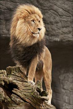 High royalty by Svenimal