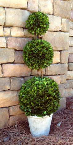 "Preserved Boxwood Topiary - Triple Ball - 36"" #boxwood #preservedboxwood…"