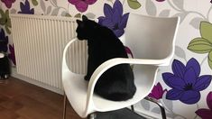 My neighbour's cat making himself at home Cat Gif, Squirrel, Pets, Videos, Animals, Animales, Animaux, Squirrels, Animal