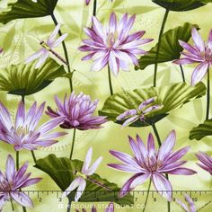 Dance of the Dragonfly - Purples Waterlily Pool Grass Green Metallic Yardage