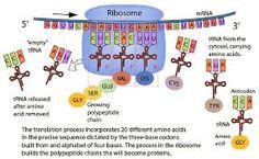 Structure of Hemoglobin   Science   Pinterest   Preschool science ...