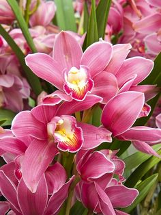duffee.gather.com  Pink Orchids
