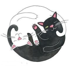 Yin & Yang Cat #illustration