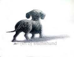 "Part of my new series of charcoal and graphite drawings ""Me and My Shadow"" 14x17  #dachshund #doxie #art"