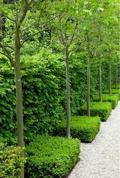 Narrow garden bed with trees and hedges.