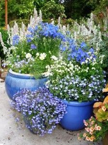 Blue & White Pot Theme: Repetition of colour is a simple design principle you can use to create impact with just a couple of planters or in a small space. Repeated use of the same colour in pots, foliage or flowers can bring unity to an arrangement or collection. More design tips @ http://themicrogardener.com/design/ | The Micro Gardener