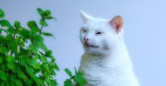 32 Ideas De Salud Gatos Gatos Felino Gato Enfermo