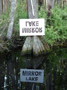 Okeefenokee Swamp tour. Check and have lots of pics to show for it!