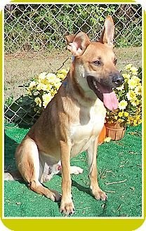 Act quickly to adopt . Pets at this Shelter may be held for only a short time.Marietta, GA - German Shepherd Dog Mix. Meet TUCKER a Dog for Adoption.