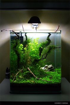 AquaScapers in Portrait