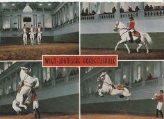 LIPIZZAN HORSE POSTCARD - SPANISH RIDING SCHOOL AUSTRIA - AIRS ABOVE THE GROUND