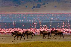 Your 9 days Tanzania wildlife safari is a wildlife tour in Tanzania to the splendid Serengeti, Lake Manyara, Ngorongoro crater & Tarangire National Parks. Crater National Park, Serengeti National Park, Tanzania Safari, Arusha, Wildlife Safari, World Heritage Sites, Cool Places To Visit, Wilderness, Adventure