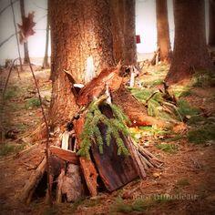 Fairy Forest Mackworth Island Maine
